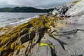 Rugged newfoundland shore rocks and seaweed cover the of a bay in the province of and labrador Royalty Free Stock Images
