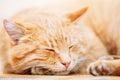 Ruhiges orange rot tabby cat male kitten sleeping in sein bett an Lizenzfreie Stockfotografie