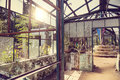Ruined greenhouse with plants and tree inside in botanical garden puducherry india Royalty Free Stock Image