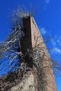 Ruines et arbre Photo stock