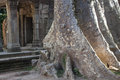 Ruins of ancient angkor temple ta phrom cambodia Royalty Free Stock Images
