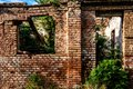 Ruins of old abandoned red brick house with windows and door and green wild plants inside Royalty Free Stock Photo