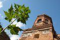 Ruins of an orthodox church ruined with a bell tower and a young maple tree over a blue sky Stock Image