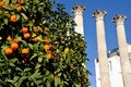 Ruins of roman temple in cordoba andalusia spain with orange tree at the forefront Royalty Free Stock Photos