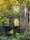The ruins of staups mill overgrown with trees Royalty Free Stock Photo