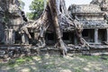 Ruins and strangler fig tree in preah khan ficus at the area of angkor Royalty Free Stock Image