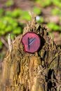Rune Fehu carved from wood on an old stump Royalty Free Stock Photo