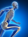 Runner anatomy d rendered illustration Stock Image