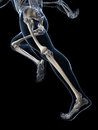 Runner anatomy d rendered illustration Royalty Free Stock Photo