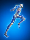 Runner anatomy d rendered illustration Royalty Free Stock Image