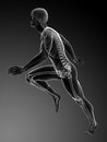 Runner anatomy d rendered illustration Royalty Free Stock Photography