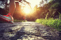 Runner athlete runner legs on forest trail Royalty Free Stock Photo
