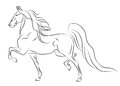 Beh americký kôň skica