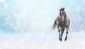 Running black horse in snow winter banner for website Stock Images