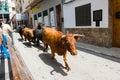 Running bulls Royalty Free Stock Photo