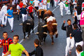 Running of the Bulls Royalty Free Stock Photo