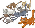 Running cats Royalty Free Stock Images