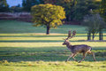 Running deer in the yard Stock Images