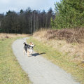 Running Dog Outdoor In Nature