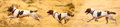 Running dogs banner Royalty Free Stock Photo