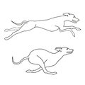 Running dogs whippet breed, two poses