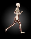 Running female medical skeleton d render of a Royalty Free Stock Images