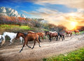 Running horses in the autumn mountains at sunset Royalty Free Stock Photo
