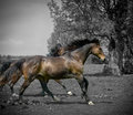 Running horses two in a field instagram styled effect Royalty Free Stock Image