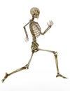 Running human skeleton Royalty Free Stock Photo