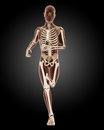 Running male medical skeleton d render of a Royalty Free Stock Image