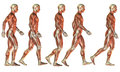 Running Male muscle study Royalty Free Stock Photo