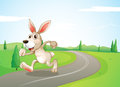 A running rabbit at the road Royalty Free Stock Photo