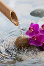 Running water on stones with flowers zen environment beauty symbol Stock Images