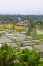Rural area in west Sumatra Royalty Free Stock Photography
