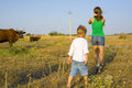 Rural children on a meadow with cows graze in the summer Stock Photography