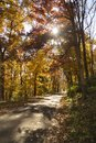 A rural country road travels between trees showing bright fall color Royalty Free Stock Photo