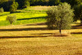 Rural countryside landscape in Tuscany Stock Images