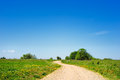 Rural expanse dirt road between green hills Stock Photography