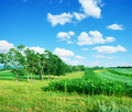 Rural farmland Royalty Free Stock Photography