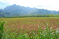 Rural farmland crops amid high mountains thailand Royalty Free Stock Photo