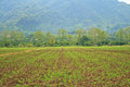 Rural farmland crops amid high mountains thailand Royalty Free Stock Photography