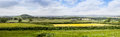 Rural farmland in devon near dartmoor panoramic view of england looking towards with cows the foreground and sheep grazing fields Royalty Free Stock Image