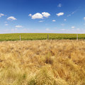 Rural field. Royalty Free Stock Photo