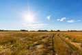 Rural field and country road, under bright sun light Royalty Free Stock Photo