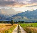Rural fields near the high mountains composite landscape image lonely trees path through green to rocky peaks of in evening haze Stock Images