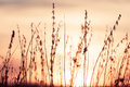 Rural grass on meadow and sunset sky black silhouette Royalty Free Stock Photo