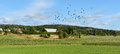 Rural landscape with birds Royalty Free Stock Photos