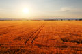 Rural landscape at dawn with the sun over the fields nice Royalty Free Stock Photos