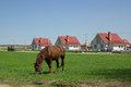 Rural landscape with a horse belarus Stock Photos