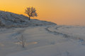 Rural landscape with lonely apricot tree on a hill at sunset time and winter season ukrainian Stock Photo